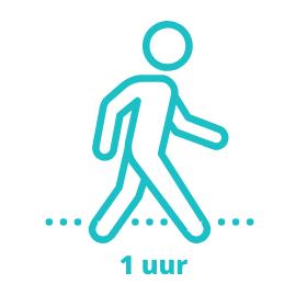 Online wandeltraining voor beginners
